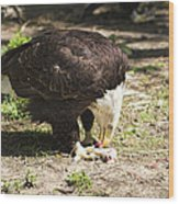 Magnificent Bald Eagle Breakfast Wood Print