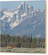 Magnificent Elk Wood Print