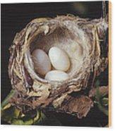 Magnificent Hummingbird Eggs Wood Print