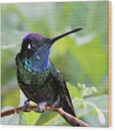 Magnificent Hummingibrd Male Wood Print
