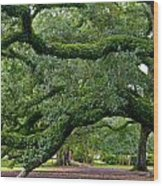 Magnificent Oak Alley Tree Wood Print