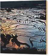 Magnificent Rice Terrace Wood Print