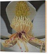 Magnolia 14-4 Wood Print