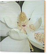 Magnolia Love Wood Print