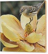 Magnolia And Warbler Photo Wood Print