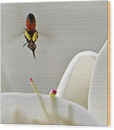 Magnolia Bee Dive Wood Print
