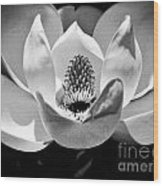 Magnolia Bloom 2bw Wood Print