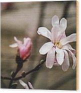 Magnolia Blooms Wood Print