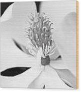 Magnolia Blossom 1 Black And White Wood Print