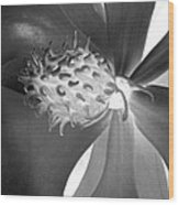 Magnolia Blossom - Photopower 2476 Bw Wood Print
