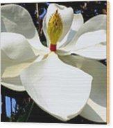 Magnolia Carousel Wood Print