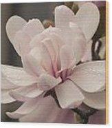Magnolia Dream Wood Print