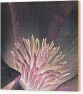 Magnolia Flower - Photopower 1824 Wood Print