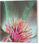 Magnolia Flower - Photopower 1843 Wood Print