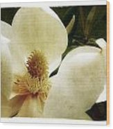 Magnolia I Wood Print by Tanya Jacobson-Smith