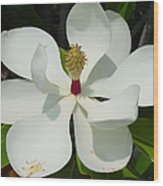 Magnolia II Wood Print