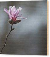Magnolia In Sun Wood Print