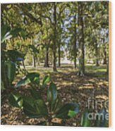 Magnolia Leaves Wood Print