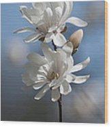Magnolia Magnificence  3245 Wood Print