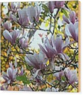 Magnolia Maidens In A Border Wood Print