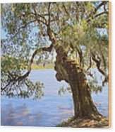 Magnolia Plantation And Gardens In Charleston Sc Wood Print