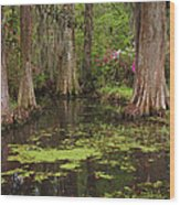 Magnolia Plantation Gardens Spring Series I Wood Print