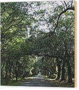 Magnolia Plantation Road Wood Print