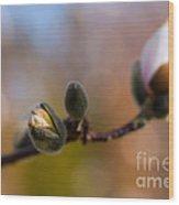 Magnolia Season II Wood Print