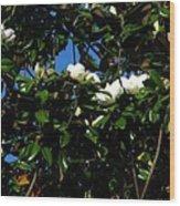 Magnolia Setting Wood Print