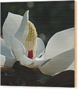 Magnolia Tiny Gem Wood Print