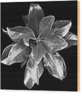 Magnolia Tree Leaves Wood Print