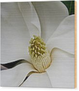 Magnolia Two Wood Print