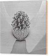 Magnolia Veil Wood Print