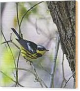 Magnolia Warbler Wood Print