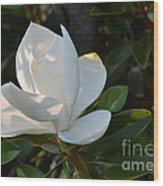 Magnolia With Best Bud Wood Print
