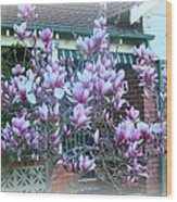 Magnolias At Home Wood Print