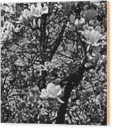 Magnolias In White Wood Print