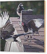 Magpie Dispute Wood Print