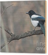 Magpie Wood Print