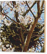 Magpie Nest In Cherry Tree Wood Print