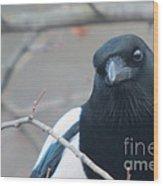 Magpie Portrait Wood Print