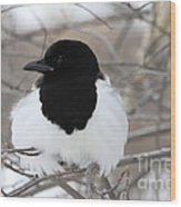 Magpie Profile Wood Print