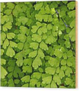 Maidenhair Fern Wood Print