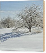 Maine Apple Trees Covered In Ice And Snow Wood Print