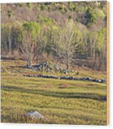 Maine Blueberry Field In Spring Wood Print by Keith Webber Jr