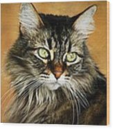 Maine Coon In Topaz Wood Print