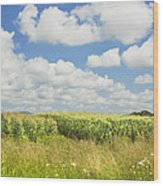 Maine Corn Field In Summer Photo Print Wood Print