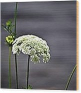 Maine Flora Wood Print