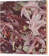 Maine Maple Leaves Wood Print