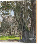 Majestic Live Oak Tree Wood Print